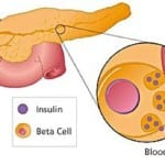 инсулин в организме