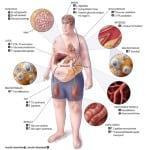 инсулин в организме человека