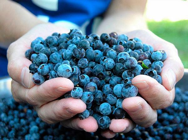 Голубика при сахарном диабете 2 типа: рецепты и профилактика ...
