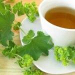 Трава манжетка при сахарном диабете: рецепт для лечения диабетиков