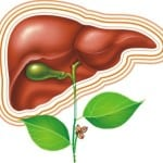 печень при диабете лечение диагностика