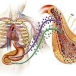 Эндокринология и сахарный диабет 2 типа: заключение врача эндокринолога