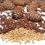 Кедровые орехи при диабете 2 типа: польза для организма