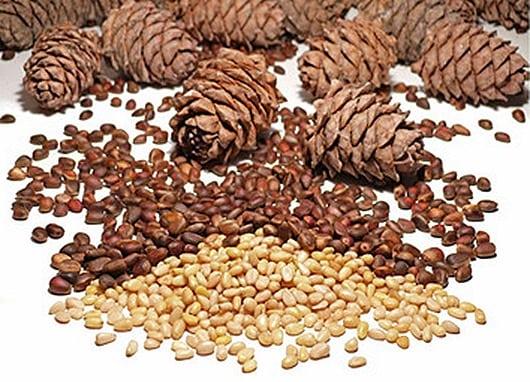 Кедровые орехи при сахарном диабете 2 типа: можно ли их есть ...