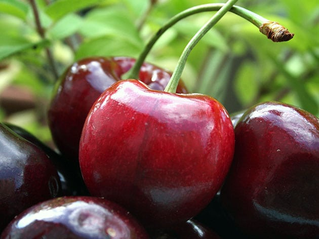 Вишня при сахарном диабете 2 типа: польза и вред для диабетика и ...
