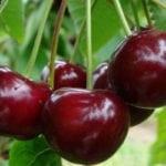 Какие фрукты можно есть при повышенном сахаре в крови?