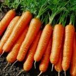 Можно ли есть морковь при сахарном диабете 2 типа?