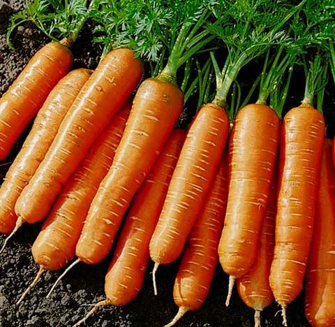 морковь при сахарном диабете 2 типа
