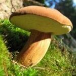 Можно ли есть грибы при сахарном диабете?