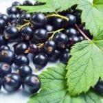 Смородина при сахарном диабете 2 типа: можно ли есть черную и красную смородину?