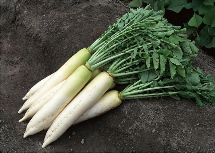 Редька при повышенном холестерине: польза овоща в диете для ...