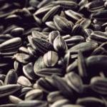 Можно ли есть семечки при панкреатите поджелудочной железы?