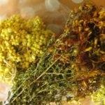 Какие травы можно пить при панкреатите и холецистите?