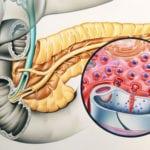 Как работает поджелудочная железа у человека: расположение и анатомия