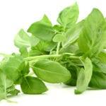 Какую зелень можно есть при панкреатите?