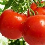 Снижает ли морковь холестерин в крови?