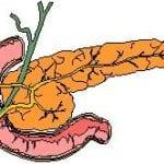 Куда впадает проток поджелудочной железы?