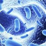 Стеаторея, креаторея, амилорея: что это такое при панкреатите?