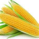 Можно ли кукурузу при панкреатите?