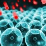 Зачем нужен холестерин в организме человека?