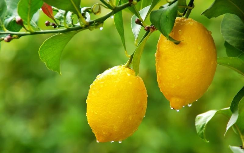 Можно ли есть лимоны при сахарном диабете